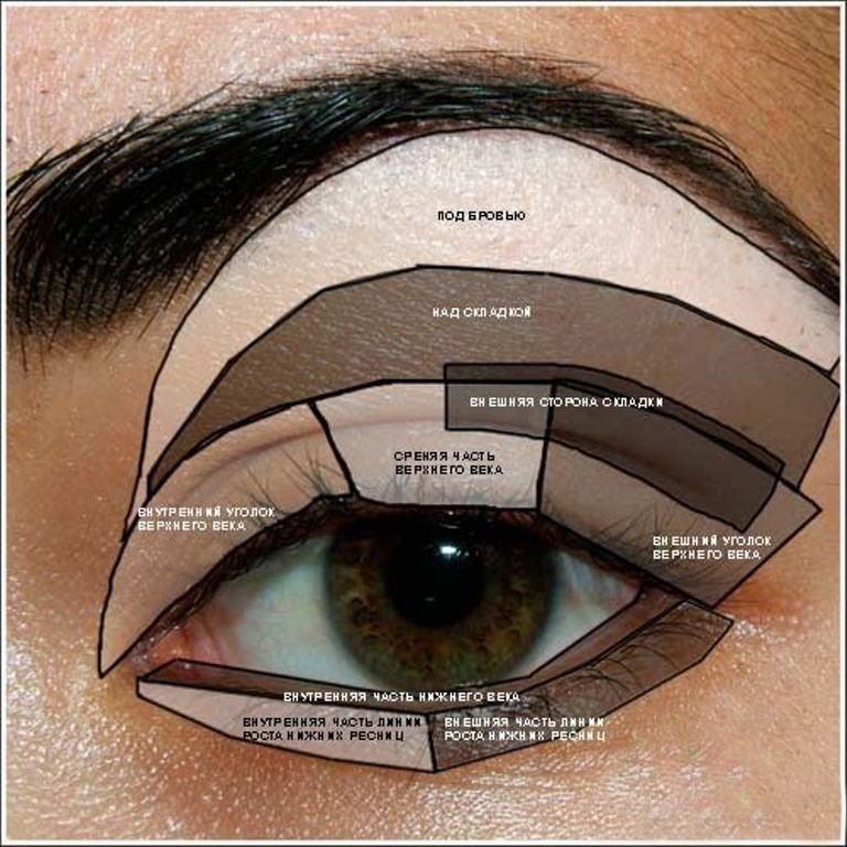 Основные участки глаза с которыми должны работать красавицы